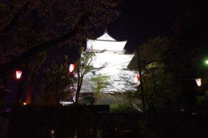 小田原城のさくら